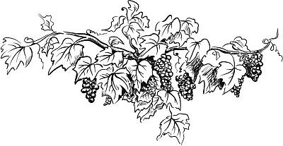 葡萄,自然,绘画插图,有蔓植物,边框,铅笔画,水果,秋天,无人,熟的