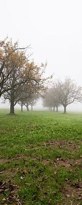 秋天,风景,垂直画幅,绿色,地形,无人,全景,户外,草,秃树