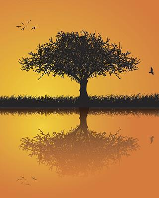 水,天空,草原,绘画插图,鸟类,巨大的,早晨,夏天,湖