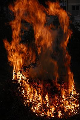 木制,灰树,垂直画幅,纹理效果,夜晚,地狱火,户外,烟,特写,树林