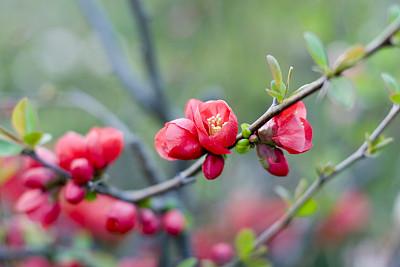 梅花,植物叶柄,李树,选择对焦,天空,美,禅宗,水平画幅,无人,纯净