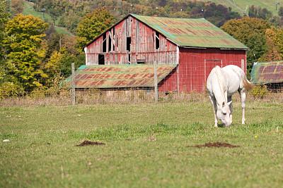 白马,食草,自然,非都市风光,水平画幅,谷仓,家畜,无人,动物,农场