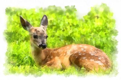 小鹿,新生动物,自然,野生动物,水平画幅,绘画艺术品,无人,绘画插图,户外