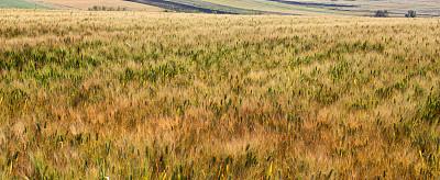 春天,开垦地,金色,自然,水平画幅,绿色,地形,景观设计,无人,全景
