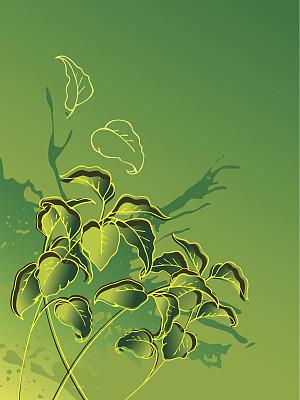 叶子,绿色,叶绿素,自然,无人,绘画插图,农作物,植物茎,春天,田地