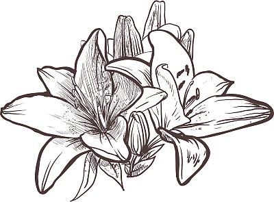 仅一朵花,美,灵感,art deco风格,艺术,形状,枝繁叶茂,无人,绘画插图