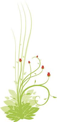 玫瑰,自然,纹理效果,绿色,无人,绘画插图,螺线,仅一朵花,脆弱,华丽的