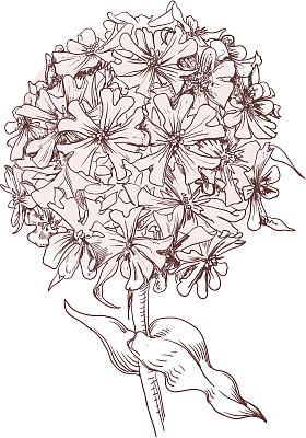 仅一朵花,美,灵感,艺术,形状,枝繁叶茂,无人,绘画插图,古典式