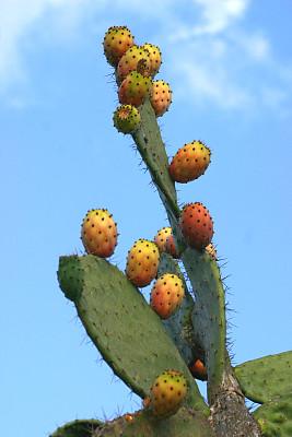 仙人球,仙人掌果,自然,垂直画幅,绿色,橙色,素食,水果,无人,蓝色