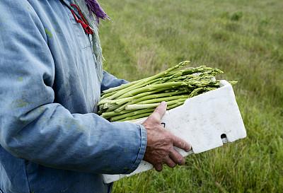 农作物,清新,盒子,男人,芦笋,修枝夹,单一栽培,留白,仅男人,仅成年人