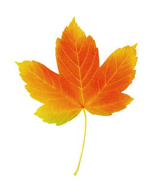 彩色图片,叶子,秋天,垂直画幅,无人,古老的,时间,特写,白色,十月