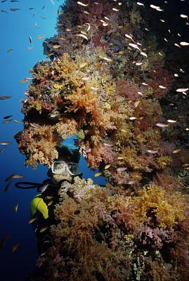 礁石,女人,蓝纹鲈,安提亚鱼 ,深海潜水,软珊瑚,鱼群,垂直画幅,水,休闲活动