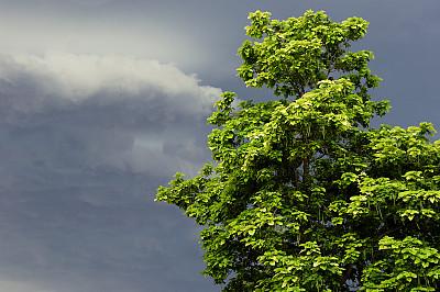 乌云,日光,堪萨斯,苦尽甘来,天空,留白,灵感,水平画幅,无人,夏天