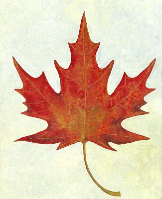 枫叶,红色,涂料,食用油,加拿大国庆日,垂直画幅,艺术,无人