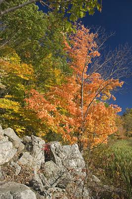 秋天,枫树,风景,垂直画幅,天空,美,公园,褐色,枝繁叶茂,山