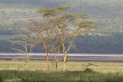 纳库鲁湖,风景,小火烈鸟,水平画幅,地形,山,无人,鸟类,非洲,户外