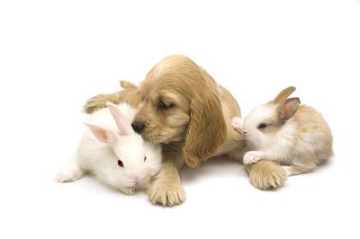 兔子,狗,英国小猎犬,水平画幅,爪子,动物身体部位,长发,哺乳纲,运动,猫