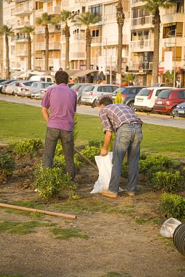 园艺,自然,垂直画幅,公园,人,城市生活,户外,城市,树苗
