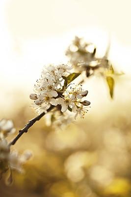 春天,花朵,垂直画幅,天空,无人,户外,特写,仅一朵花,太阳,白色