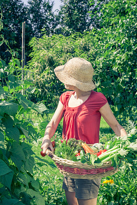 农作物,菜园,垂直画幅,胡萝卜,休闲活动,泥土,户外,篮子,西红柿,植物