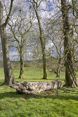 伍斯特郡,垂直画幅,山,无人,木材,英格兰,乡村风格,草,田地,英国