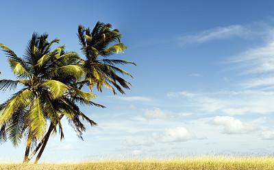 天空,蓝色,棕榈树,云,自然,留白,水平画幅,地形,无人,热带树