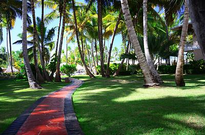 园林,鸡尾酒,普他卡那,科巴卡巴纳海滩,多米尼加共和国,天空,沙子,夏天,异国情调,棕榈树