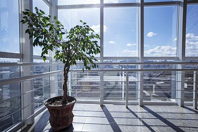 室内,自然美,气泵,水平画幅,枝繁叶茂,透过窗户往外看,野外动物,夏天,户外,仅一朵花