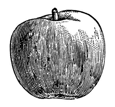 苹果,雕刻术,18世纪,影像年代,正面视角,留白,绘画插图,古老的,古典式,图像