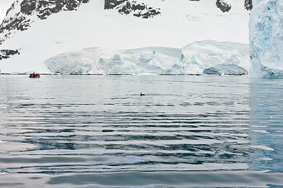 南极洲,天堂海湾,南极,南冰洋,冰川,水,雪,气候与心情,白色,冬天