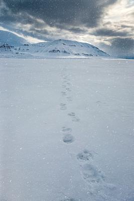 北极点,朗伊尔城,浮冰,斯匹兹卑尔根,斯瓦尔巴特群岛和扬马延岛,斯瓦尔巴德群岛,垂直画幅,天空,台阶,雪