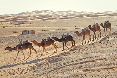 骆驼,沙漠,驼队,erg chebbi dunes,护送队,水平画幅,沙子,无人,夏天,户外