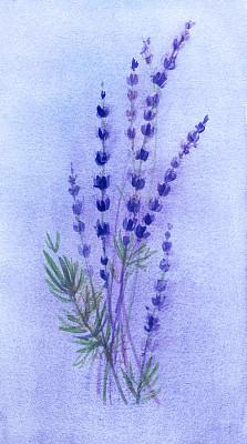 仅一朵花,熏衣草,水彩画颜料,背景,薰衣草色,垂直画幅,艺术,无人,绘画插图