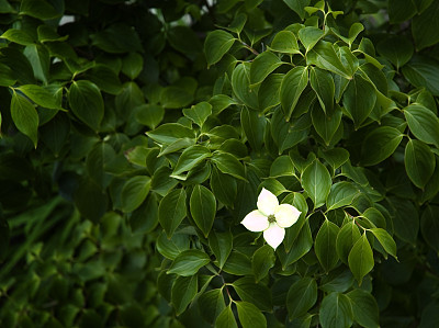 自然,留白,水平画幅,无人,时间,春天,植物,比较,与众不同,暗色