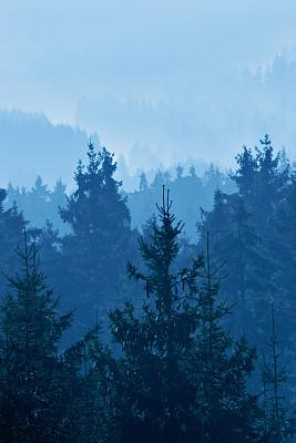 雾,森林,垂直画幅,山,夜晚,无人,曙暮光,多变的天空,云杉,树林