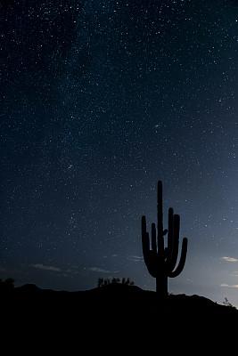 天空,夜晚,沙漠,仙女座星系,索诺兰沙漠,萨挂诺仙人掌,垂直画幅,星系,无人,科学
