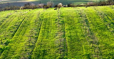 山,葡萄园,索那玛郡,水平画幅,无人,夏天,户外,草,彩色图片,农业
