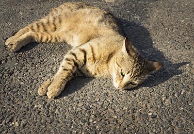 野生猫科动物,野生动物,沥青,水平画幅,无人,动物,一只动物,摄影
