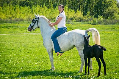 白马,美,水平画幅,优美,美人,草原,纯净,户外,草,自由