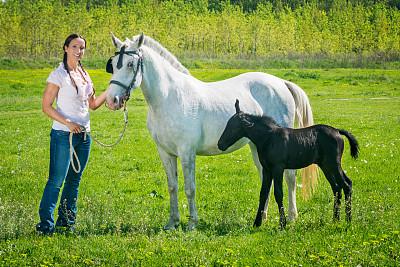 马,女人,拿着,白马,美,水平画幅,美人,草原,户外,草