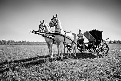 马,马轿,白马,天空,美,水平画幅,优美,美人,草原,纯净