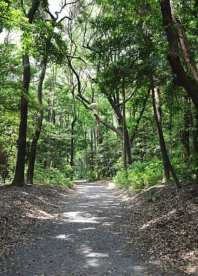 小路,日光,森林,垂直画幅,公园,枝繁叶茂,无人,夏天,阴影,偏远的