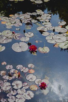 园林,东方石景花园,垂直画幅,禅宗,睡莲,星和园,景观设计,无人,日本,英格兰