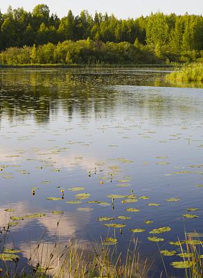 湖,北欧,芬兰,白兰地酒瓶睡莲,垂直画幅,地形,无人,夏天,户外,自然荒野区