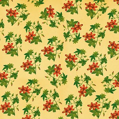 绘画插图,仅一朵花,古董,决心,高大的,壁纸,单茎玫瑰,留白,古老的