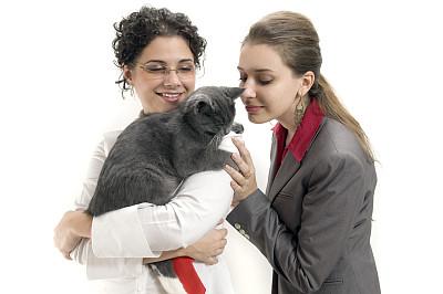 猫,女商人,水平画幅,银色,青年人,看,雌性动物,成年的,商务,20到24岁