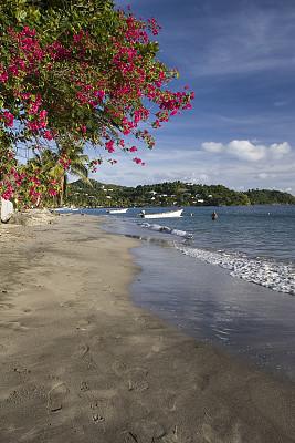 三角梅,海滩,加勒比海地区,圣卢西亚,垂直画幅,天空,度假胜地,迎风岛,向风岛,沙子