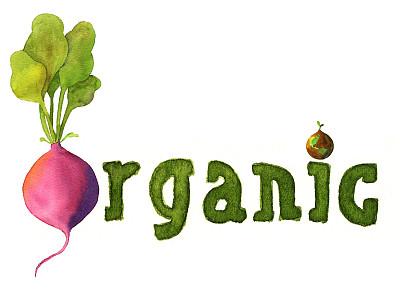 有机食品,萝卜,地球,自然,饮食,水平画幅,绿色,无人,绘画插图,泥土