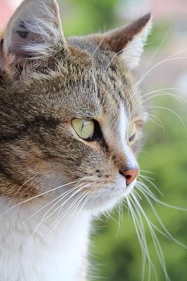 猫,垂直画幅,绿色眼睛,动物身体部位,户外,白人,前景聚焦,白色,看,大特写