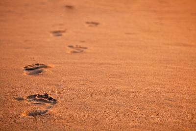脚印,沙子,自然,图像聚焦技术,选择对焦,留白,褐色,水平画幅,无人,户外